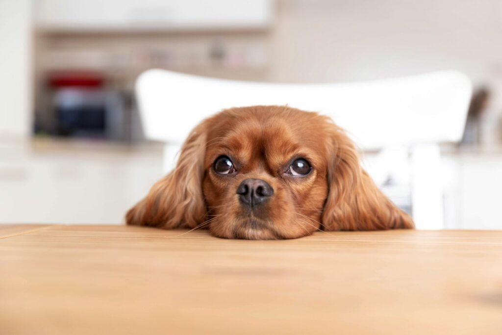 Divorcing in Tennessee: Do I Get the Family Pet?